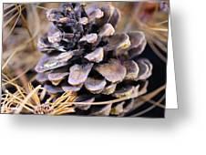 Pine Cone Rally Greeting Card
