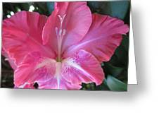 Pink And White Gladiolus Greeting Card