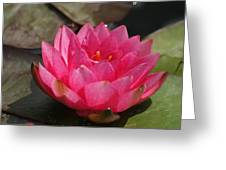 Pink Bloom... Greeting Card