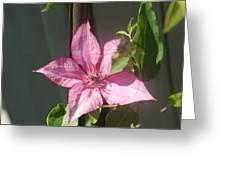 Pink  Clematis   # Greeting Card