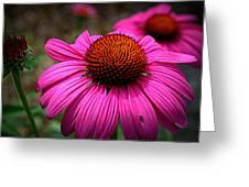 Pink Coneflower Greeting Card