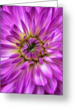 Pink Dahlia Close Up Greeting Card