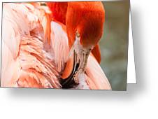 Pink Flamingo At A Zoo In Spring Greeting Card