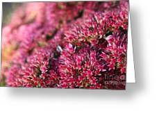 Pink Flower Bouquet Greeting Card