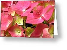 Pink Hydrangea Flowers Greeting Card