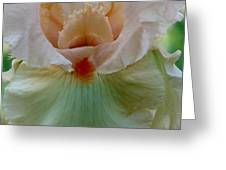 Pink Iris Greeting Card