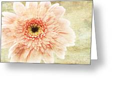 1 Pink Painterly Gerber Daisy Greeting Card