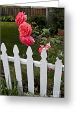 Pink Roses White Picket Fence Greeting Card