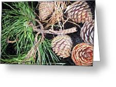 Pitch Pine Cone Greeting Card