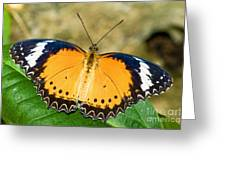 Plain Tiger Butterfly Greeting Card