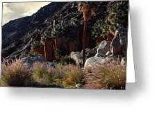 Plants On Landscape, Anza Borrego Greeting Card