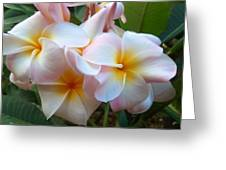 Plumeria Cluster Greeting Card