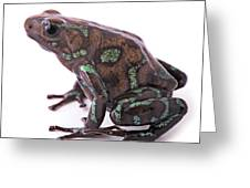 poison arrow frog Panama Greeting Card