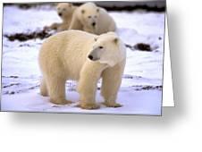 Polar Bear Family Greeting Card