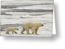 Polar Bear With Cub Greeting Card