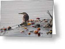 Pond Heron Greeting Card
