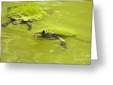 Pond Turtles Greeting Card