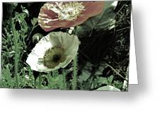 Poppies  Greeting Card by Helen Carson