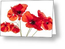 Poppy Flowers On White Greeting Card