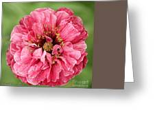 Poppy From The Angel's Choir Mix Greeting Card