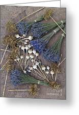 Poppy Seed Pods And Dried Lavender Greeting Card by Tim Gainey