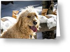 Portrait Of A Goldendoodle Sitting Greeting Card