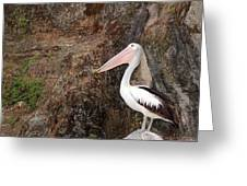 Portrait Of An Australian Pelican Greeting Card