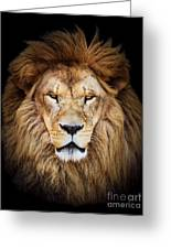 Portrait Of Huge Beautiful Male African Lion Against Black Backg Greeting Card