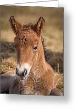 Portrait Of Newborn Foal Greeting Card