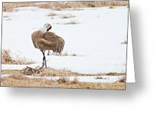 Preening Crane Greeting Card