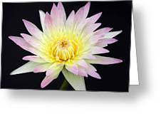 Pretty Pink And Yellow Water Lily Greeting Card