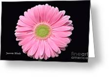 Pretty Pink Gerbera Daisy Greeting Card