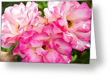 Pretty Pink Roses Greeting Card by Bobbi Feasel