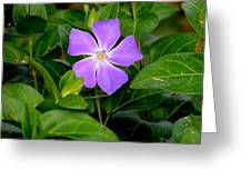 Pretty Purple Pinwheel Greeting Card