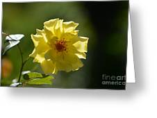 Pretty Yellow Rose Blossom Greeting Card