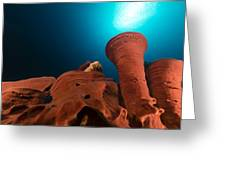 Prickly Tube-sponge And Tropical Reef In The Red Sea. Greeting Card