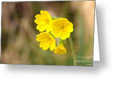 Primula Cowslip Fairy Cups Greeting Card
