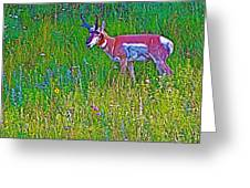 Pronghorn Among Wildflowers In Custer State Park-south Dakota Greeting Card