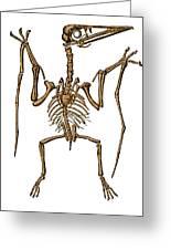 Pterodactylus, Extinct Flying Reptile Greeting Card
