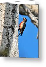 Puerto Rican Woodpecker Endemic Greeting Card