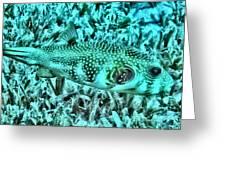 Puffer Fish Greeting Card
