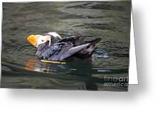 Puffin Mid Prean Greeting Card