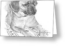 Puppy On A Blanket Pencil Portrait Greeting Card
