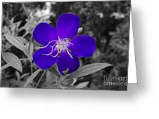 Purple Passion Greeting Card by Joe McCormack Jr