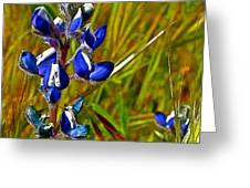 Pygmy-leaved Lupine In Antelope Valley Poppy Preserve-california Greeting Card