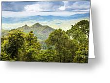 Queensland Rainforest Greeting Card
