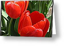 Radiant In Red - Tulips Greeting Card