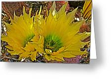 Rainbow Cactus In Big Bend National Park-texas  Greeting Card by Ruth Hager