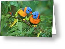 Rainbow Lorikeet Pair Greeting Card