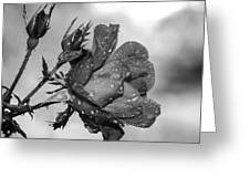 Raindrop Rose Close-up Greeting Card